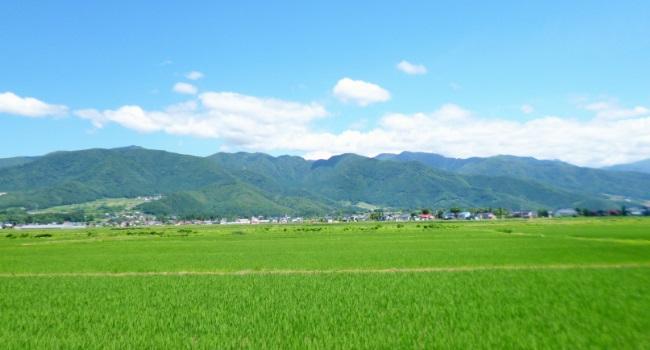150629新井柿崎線