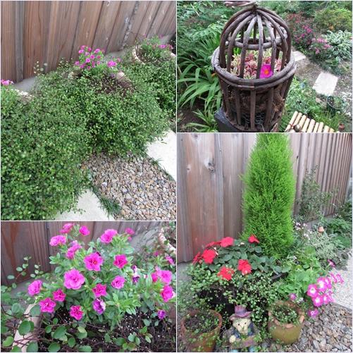 庭の花20150703