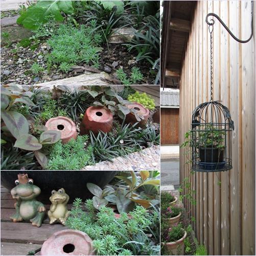 庭の花2015070302