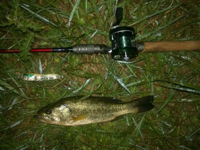夜のAs池で32cm]