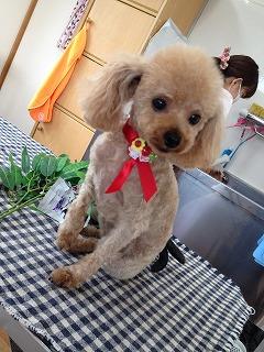 2015-06-23 前川マリン