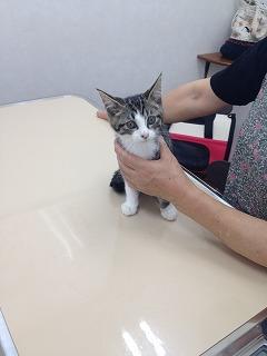 2015-07-15 仔猫さん2