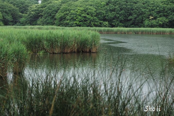一碧湖 梅雨の日々