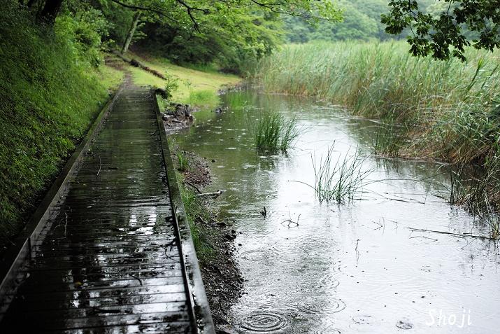 一碧湖 梅雨のひと時