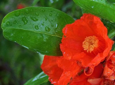 梅雨の合間5
