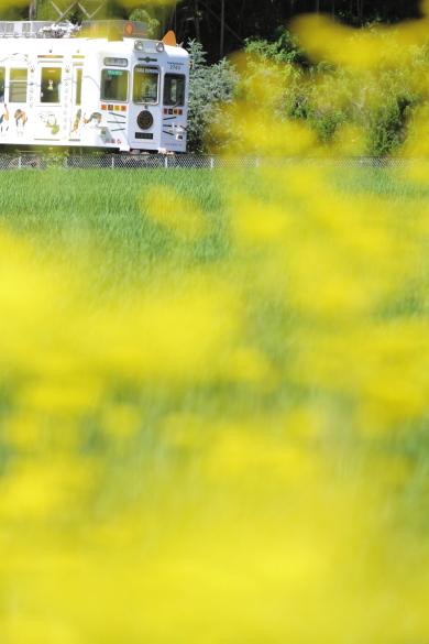 2015/7/26 和歌山電鐵貴志川線 大池遊園~西山口
