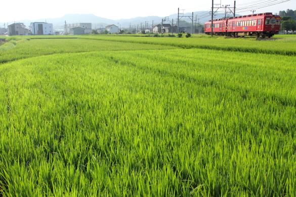 2015/8/8 和歌山電鐵貴志川線 吉礼~伊太祈曽