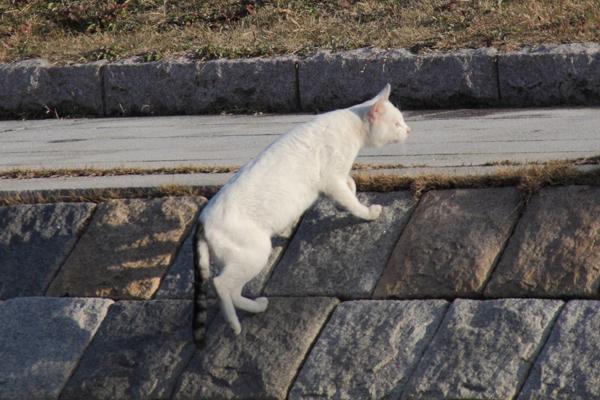 IMG_8978川辺猫s