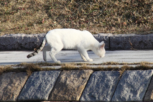 IMG_8982川辺猫s