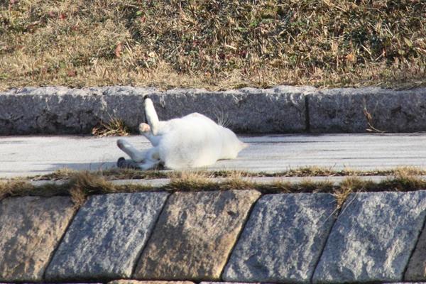 IMG_8983川辺猫s