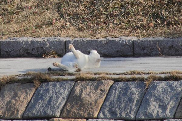 IMG_8984川辺猫s