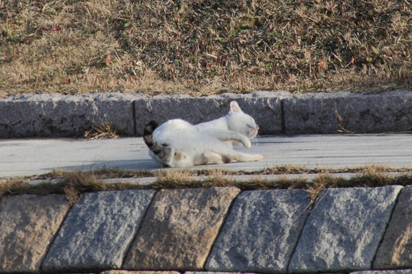 IMG_8985川辺猫s