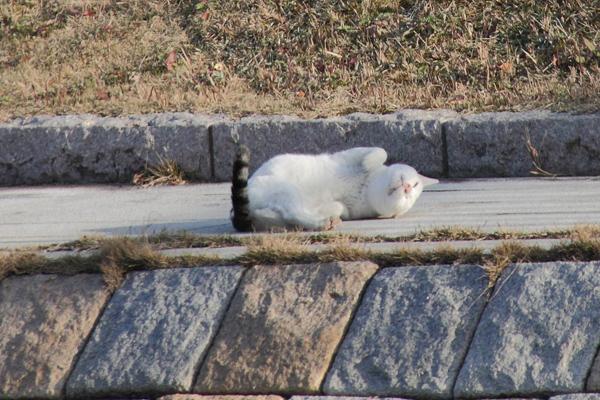 IMG_8986川辺猫s