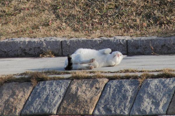 IMG_8987川辺猫s