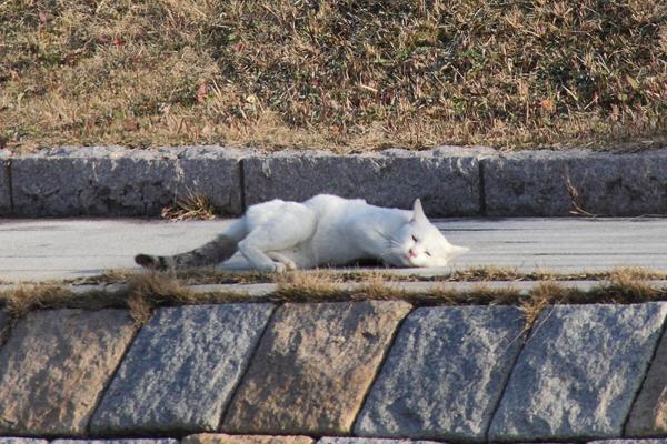 IMG_8989川辺猫s