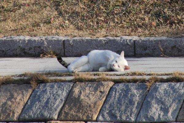 IMG_8990川辺猫s