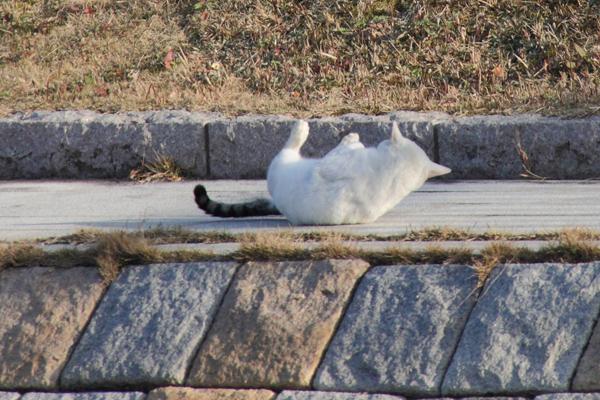 IMG_8991川辺猫s