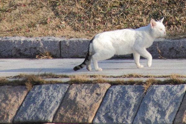 IMG_8995川辺猫s
