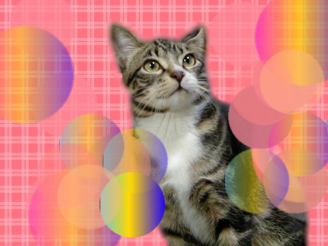 ペイントで背景画像つけたピッコロ猫2