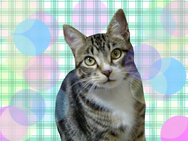 ペイントで背景画像つけたピッコロ猫3