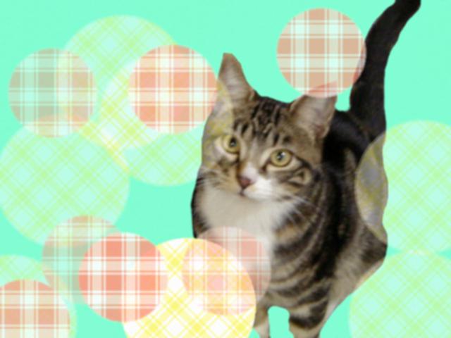 ペイントで背景画像つけたピッコロ猫4