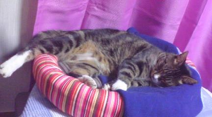 母手作り猫用ベッド ピッコロ用