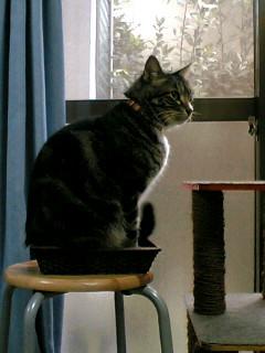 かご猫ピッコロ1