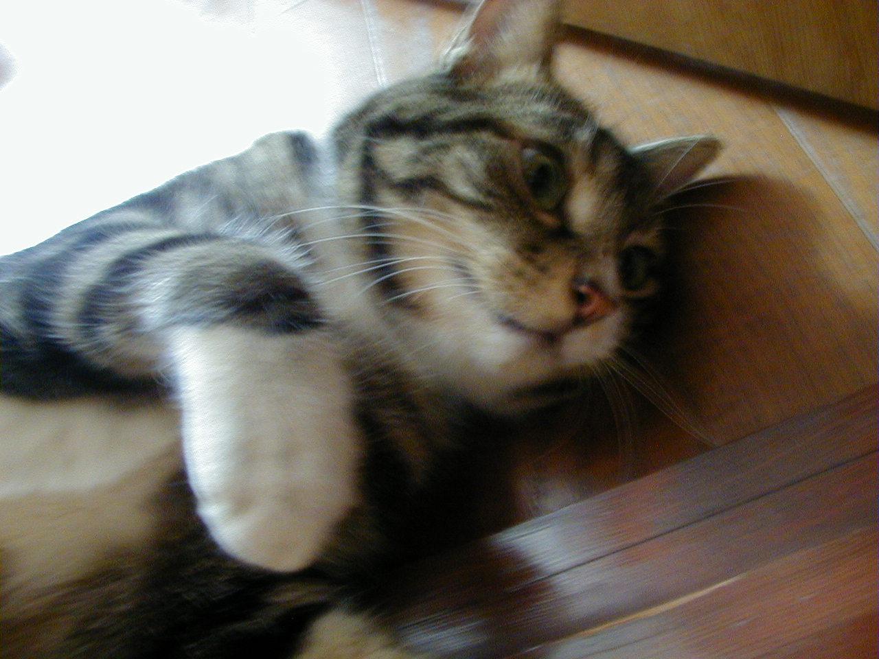大また開きで寝る猫 ピッコロの表情