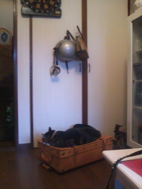 キャリーケースとピッコロ 大きな猫2