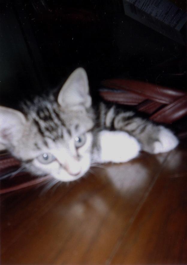 袋 猫ピッコロ
