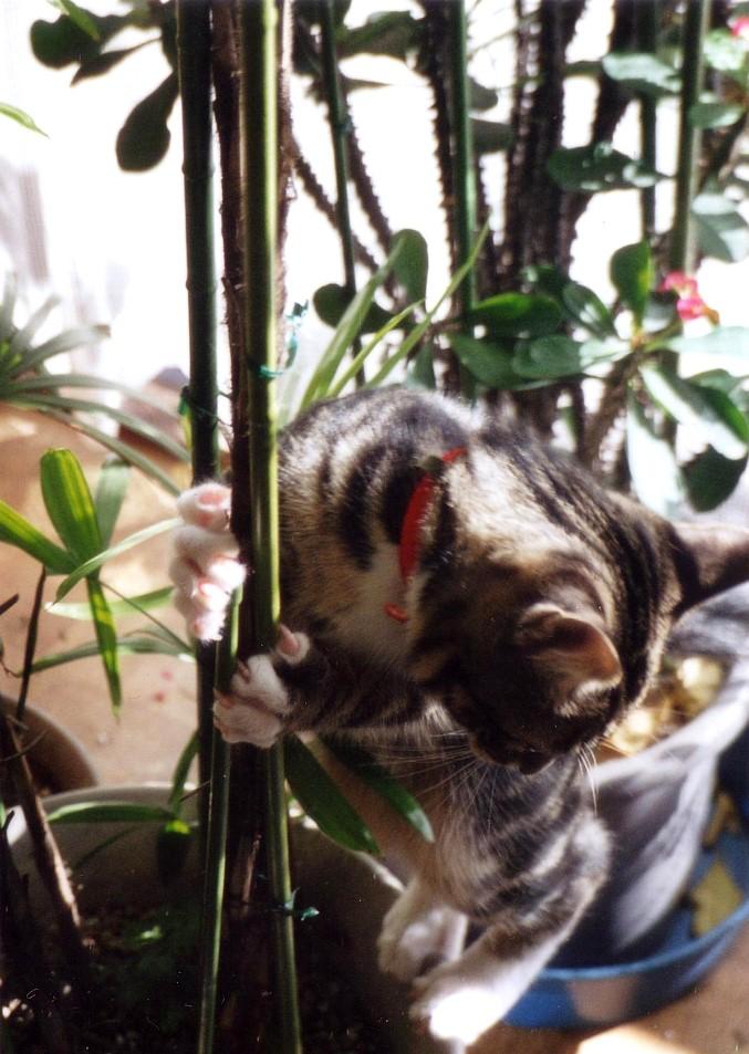 植物に登るピー