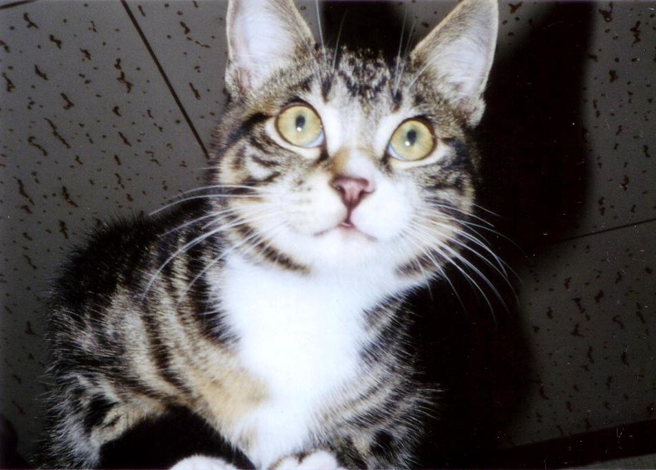 発見 驚き猫