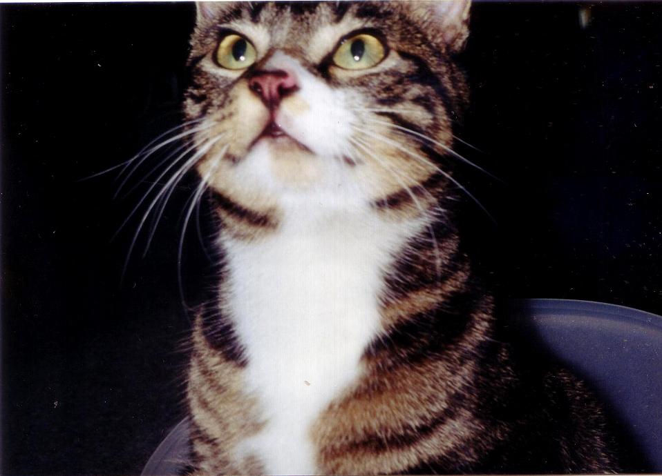 米びつでおしっこした猫