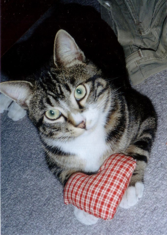 ハートをお届けする猫 ピッコロ