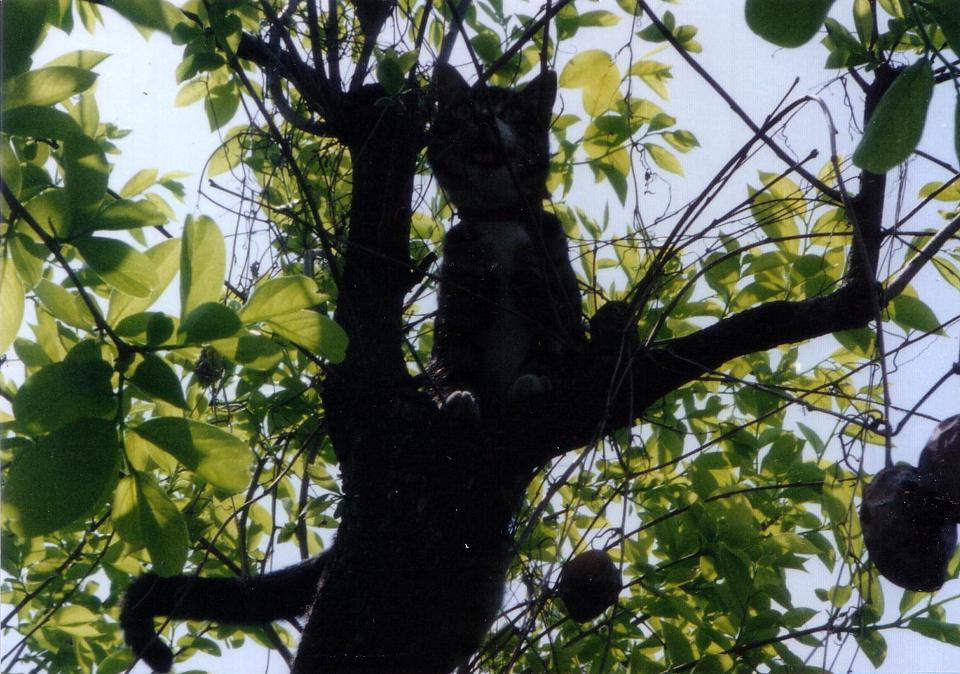 光と影の芸術 アート猫 ピッコロ2