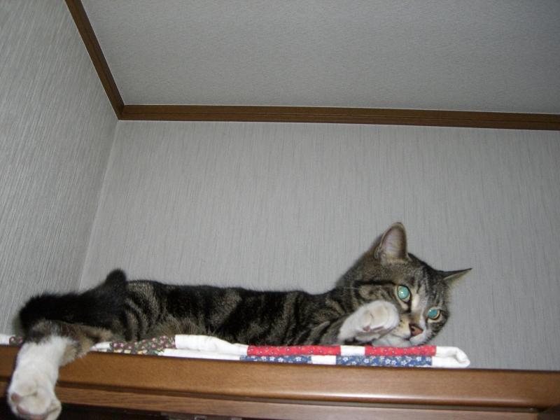 パッチワークの掛け布団に寝るピッコロ