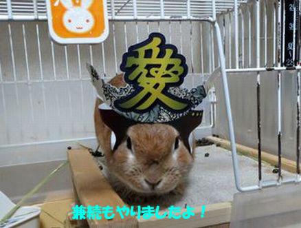 pig 20150618