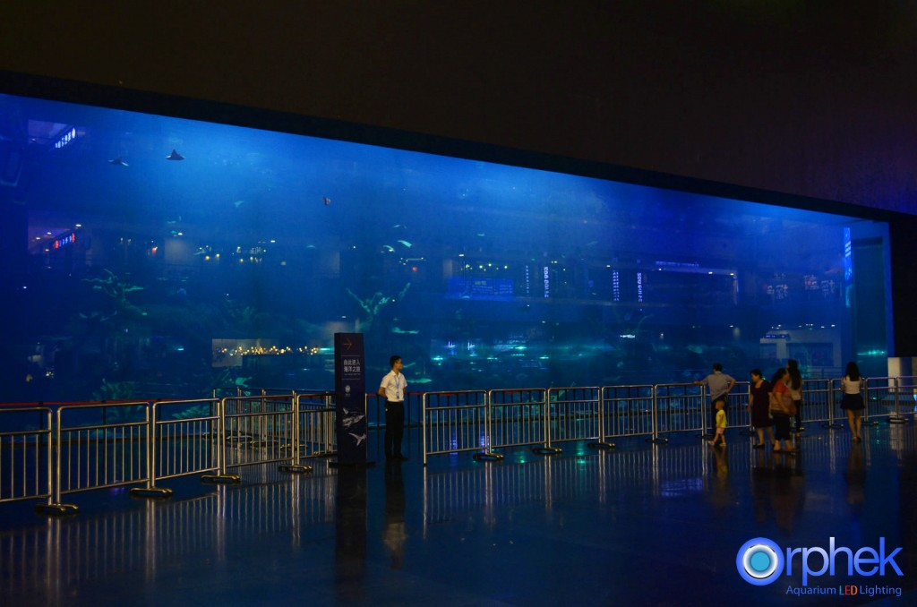 chengdu-public-aquarium-LED-lighting-Mian-aquarium-19-1024x678.jpg