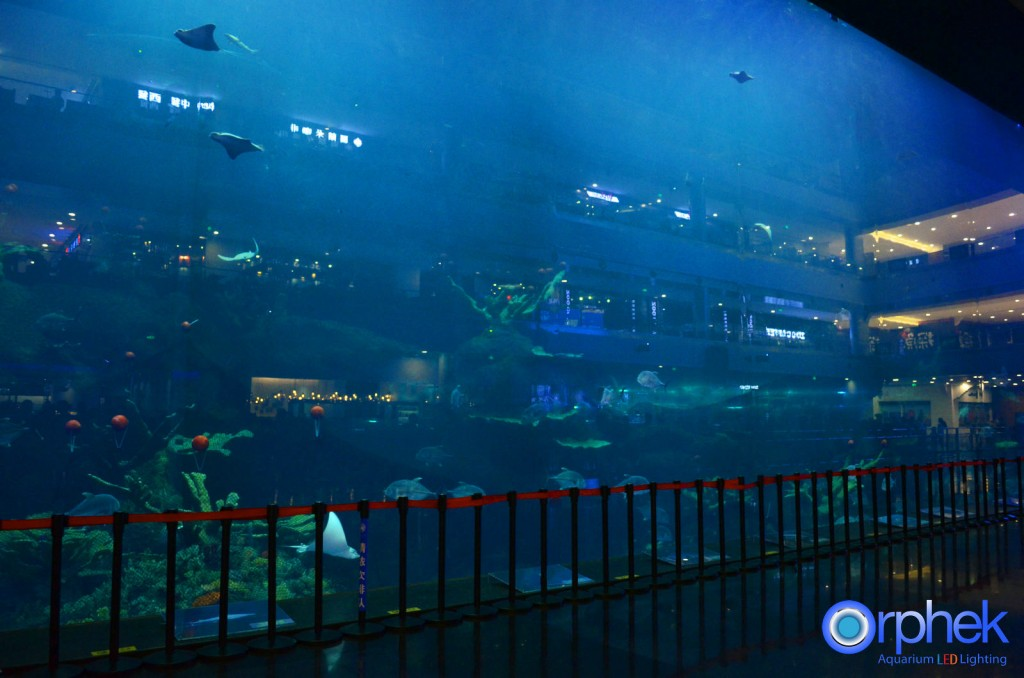 chengdu-public-aquarium-LED-lighting-Mian-aquarium-21-1024x678.jpg