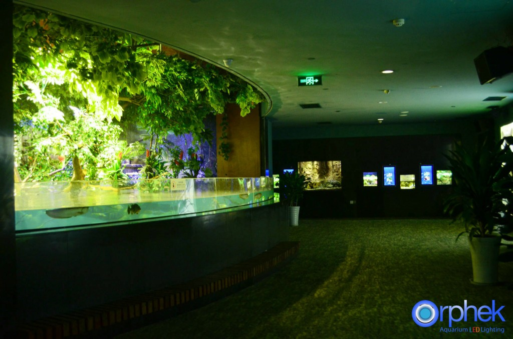chengdu-public-aquarium-LED-lighting-amazon-flooded-forest-1-1024x678.jpg