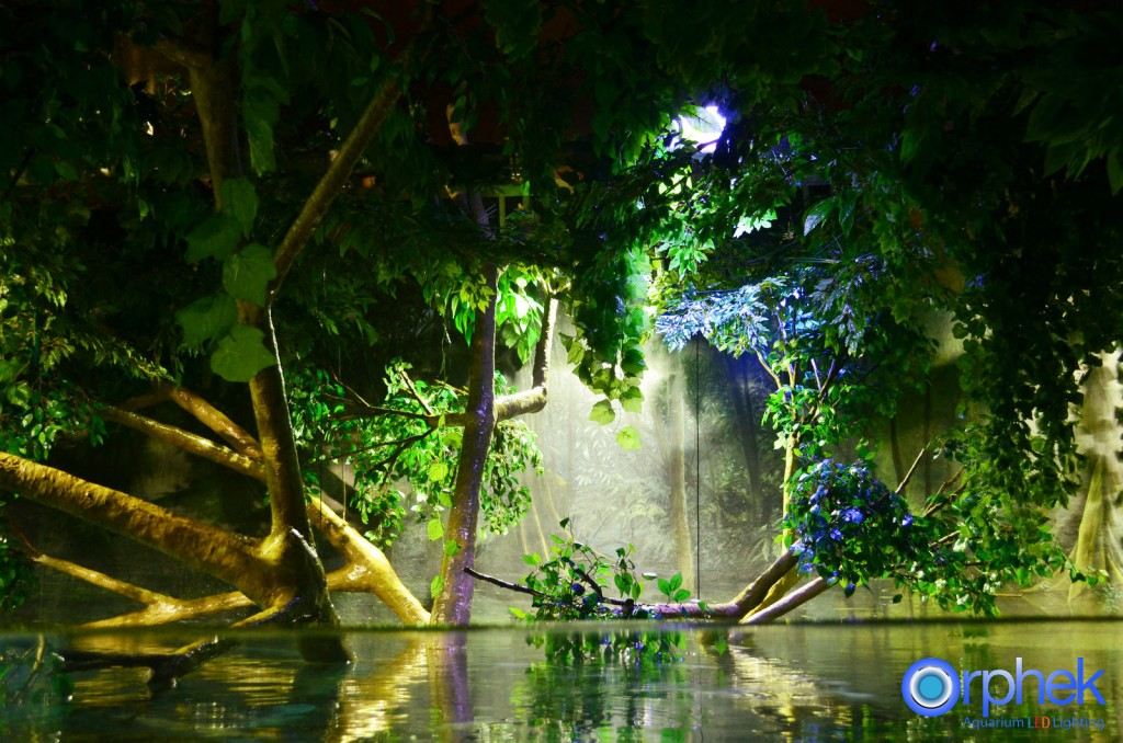 chengdu-public-aquarium-LED-lighting-amazon-flooded-forest-2-1024x678.jpg