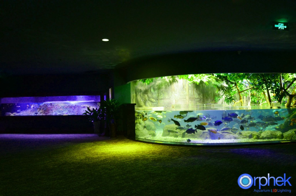 chengdu-public-aquarium-LED-lighting-amazon-flooded-forest-5-1024x678.jpg