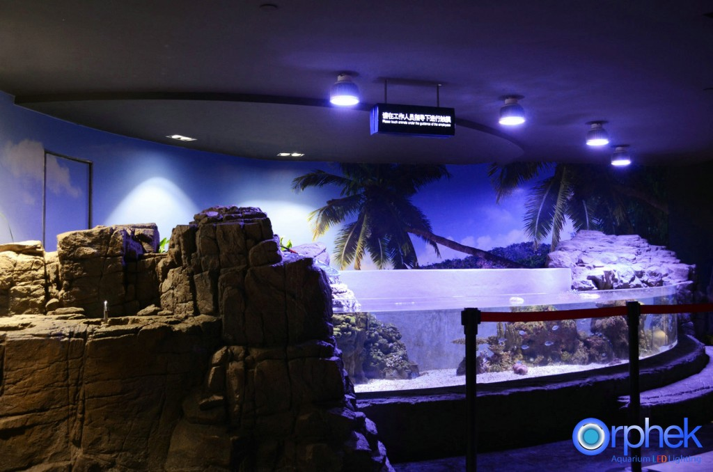 chengdu-public-aquarium-LED-lighting-amazon-zone-15-1024x678.jpg