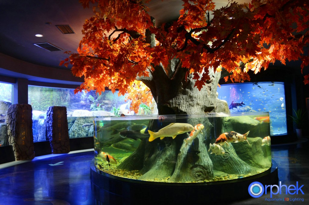 chengdu-public-aquarium-LED-lighting-china-zone-1-1024x678.jpg