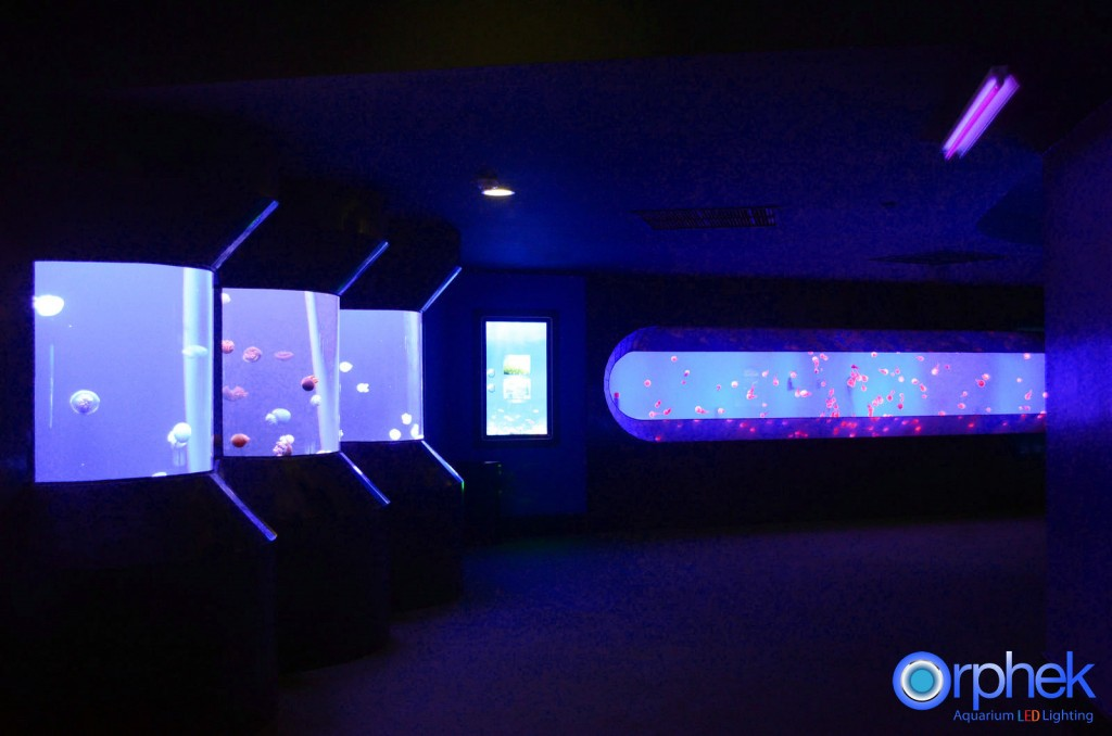 chengdu-public-aquarium-LED-lighting-jellyfish-zone-1-1024x678.jpg