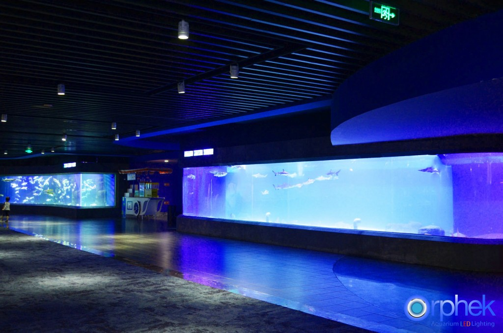 chengdu-public-aquarium-LED-lighting-special-exhibition-zone-2-1024x678.jpg
