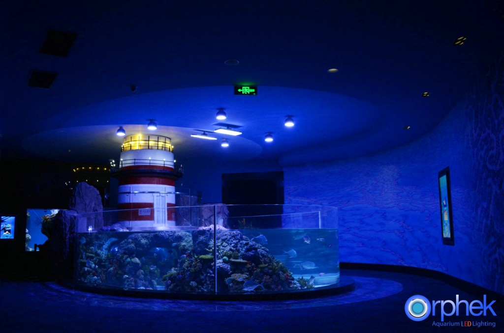 chengdu-public-aquarium-LED-lighting-tropical-sea-zone-23-1024x678.jpg