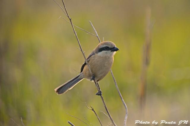 Bird1505-0018a.jpg