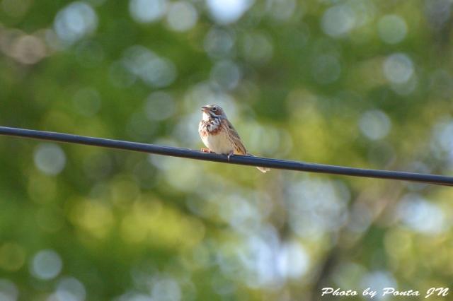Bird1505-0031.jpg
