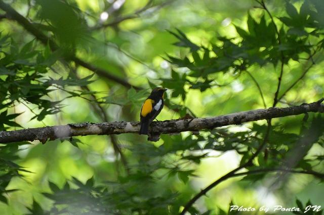 Bird1505-0033.jpg